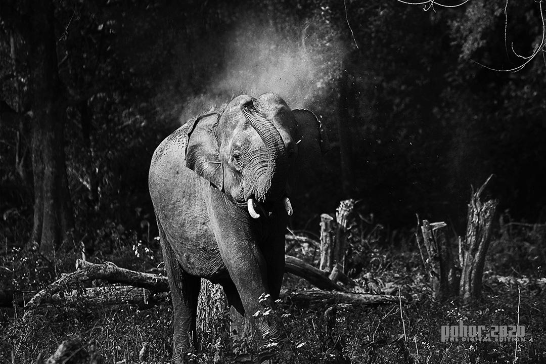 Wonders of the Wild_ Dimpee Das_ Elephant in Action