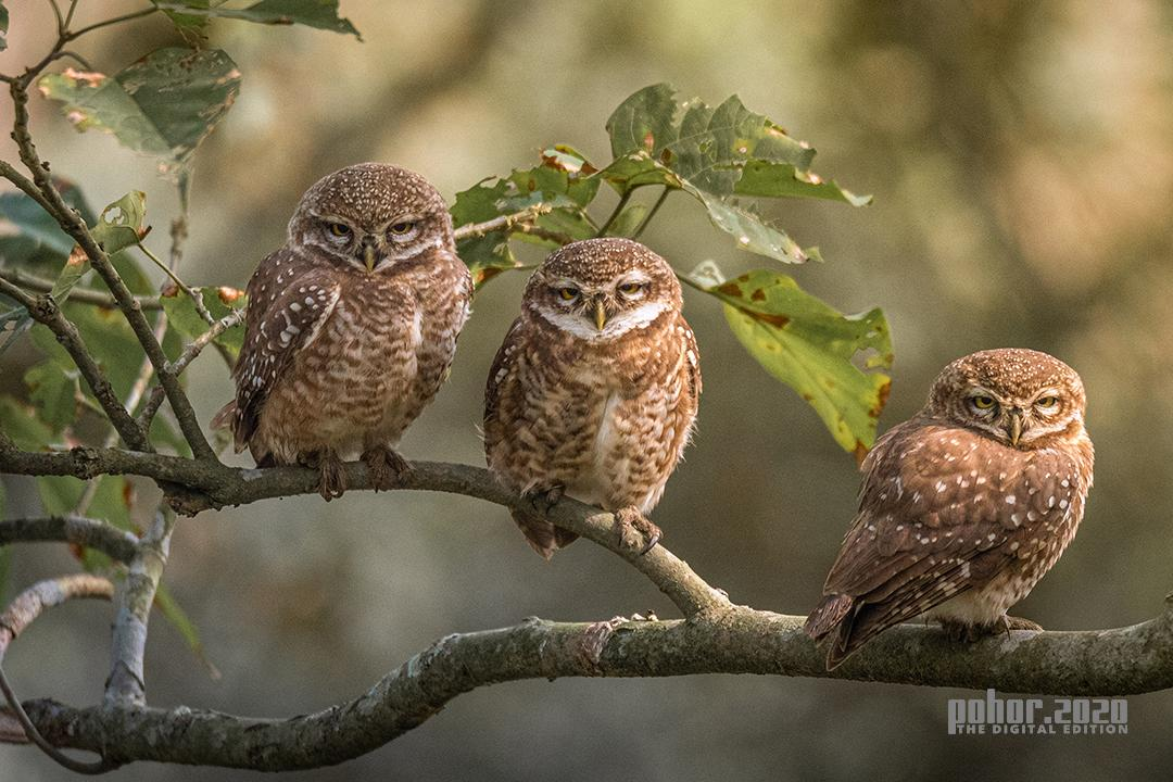 Wonders of the Wild_Abhijeet Kumar Banerjee_Three Wise Ones