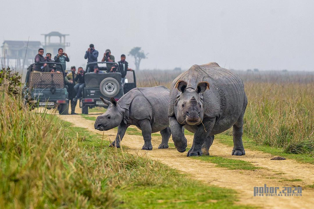 Wonders of the Wild_Alvin Sinha_Captured the Crossing - Assam's Pride