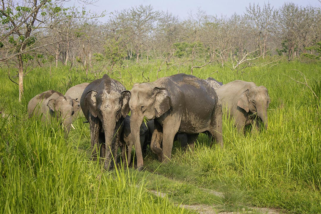Wonders of the Wild_Arnab Kakati_Family Pack