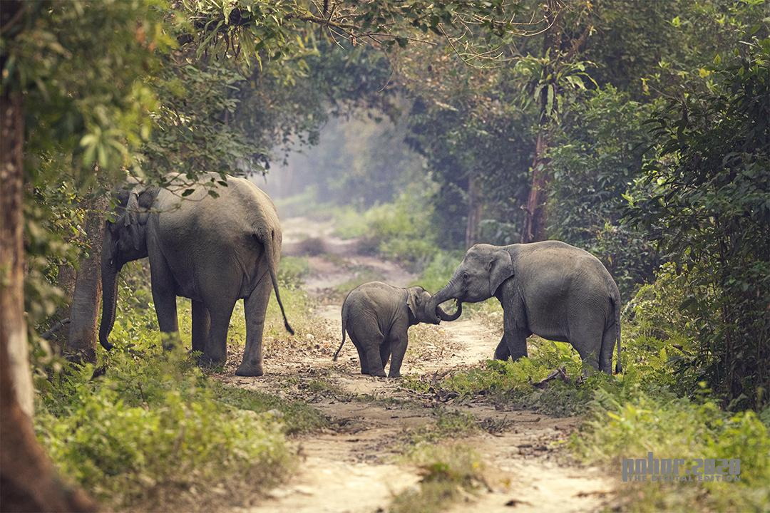 Wonders of the Wild_Henry B Nongrum_Babies Elephant Communication