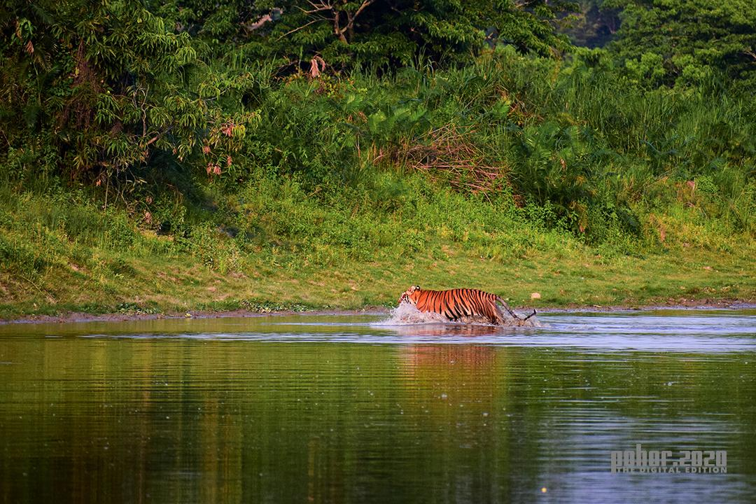 Wonders of the Wild_Lipika Talukdar_The King Crossing Over