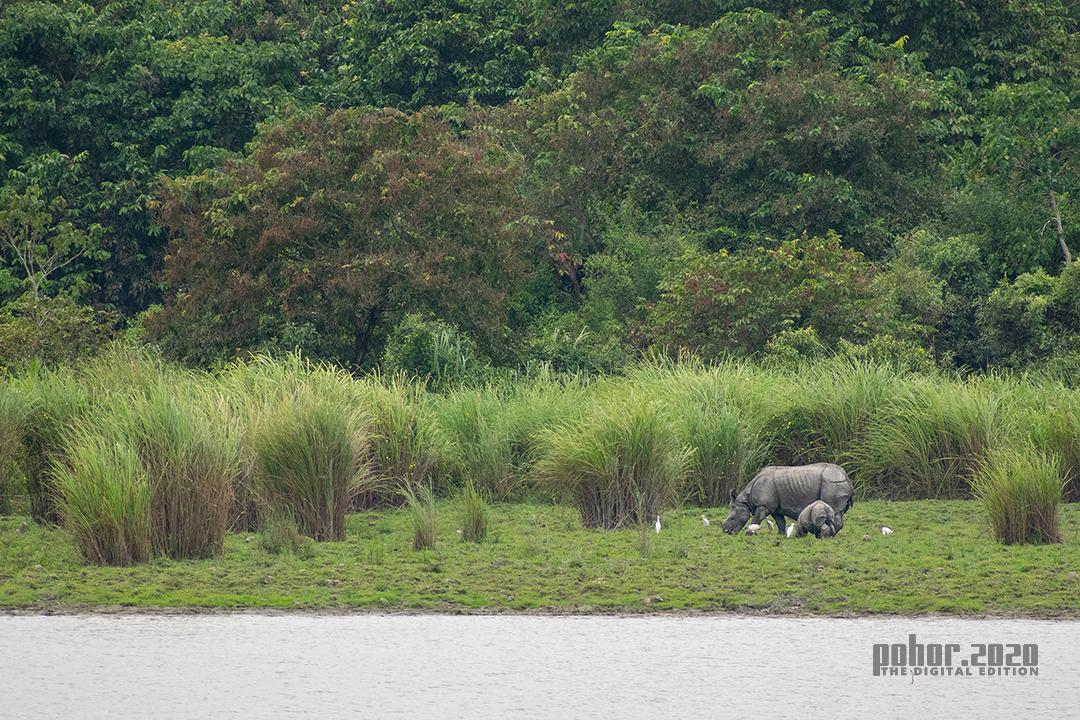 Wonders of the Wild_Maina Das_Together with Mom