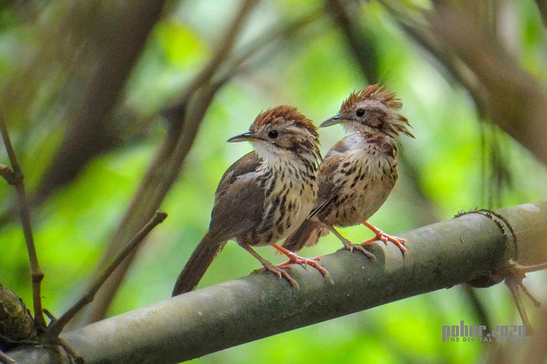 Wonders of the Wild_Meera Sinha_Two Little Friends