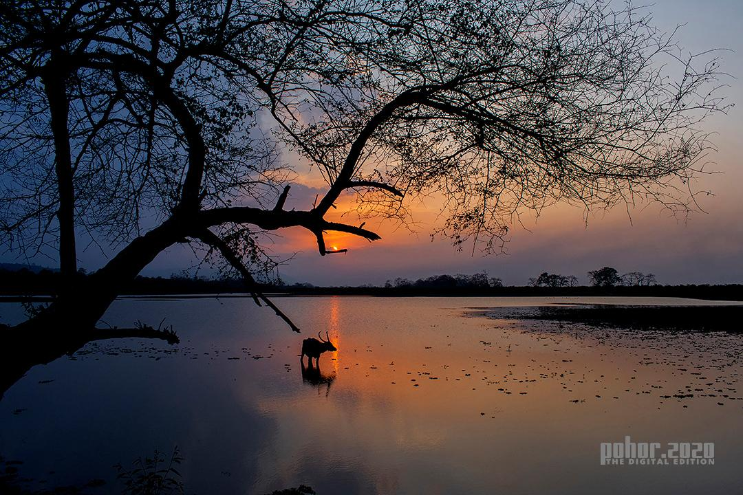 Wonders of the Wild_Samiran Halder_An evening in Kaziranga