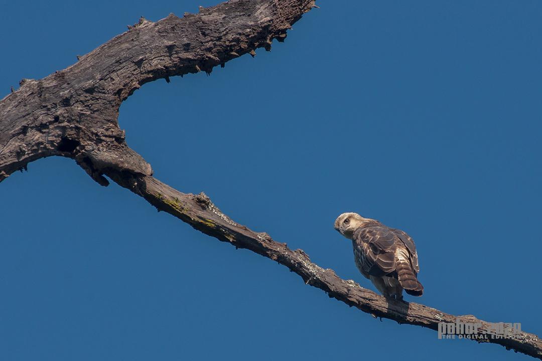 Wonders of the Wild_Uditya Kumar Borkataki_Vigilant Predator